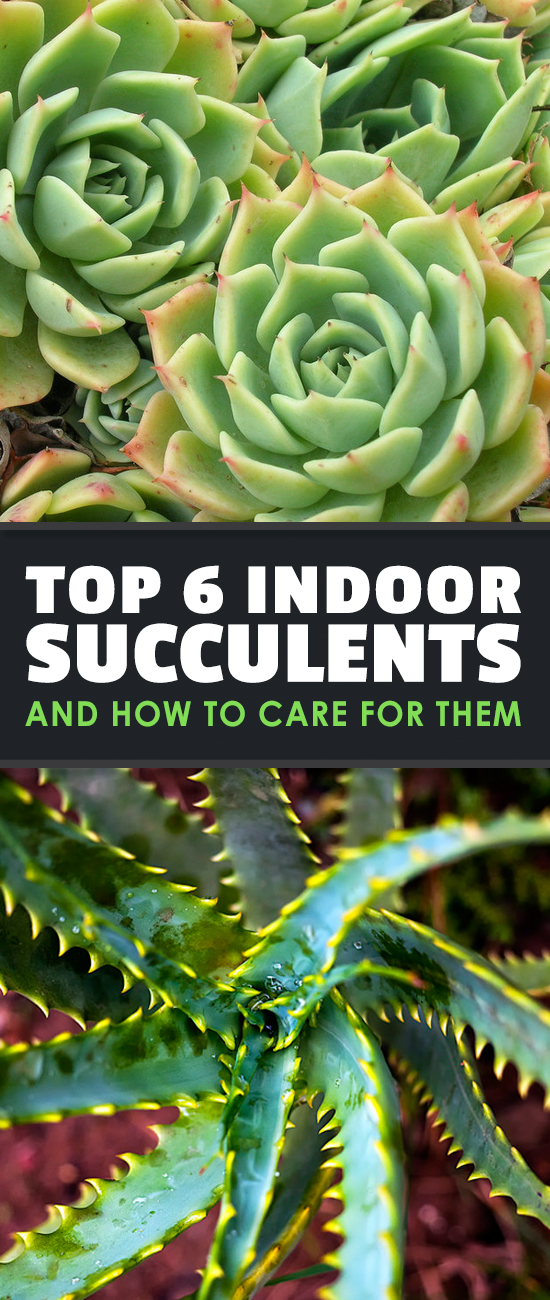 Indoor Succulents Are Taking The Gardening World By Storm. Learn How To  Care For Indoor