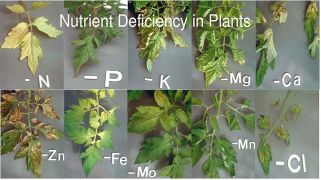Plant Nutrients Explained: Everything You Ever Need To Know