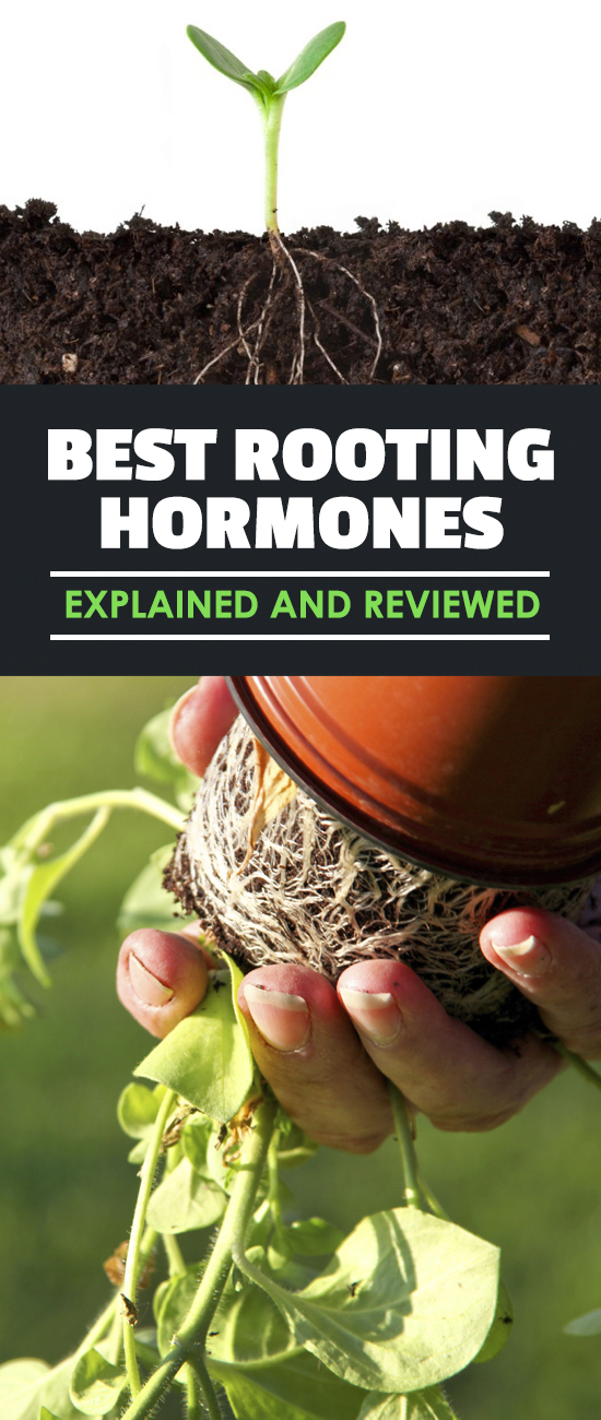 If you're not using a rooting hormone to propagate your cuttings, why not? The best rooting hormones will drastically increase your propagation success.