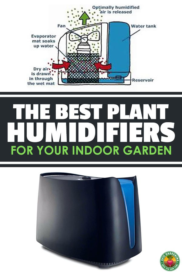 Raising the humidity in your indoor garden can be a chore...unless you use a plant humidifier. Learn how to select the best one and use it in your garden.