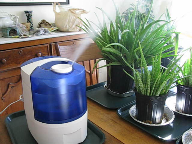 The Best Plant Humidifiers For Your Indoor Garden | Epic Gardening