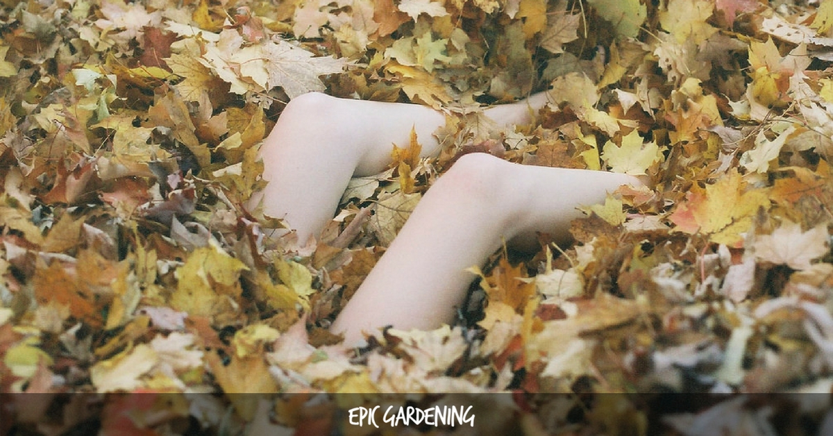 Composting Leaves How To Achieve Fast Leaf Decay Epic Gardening