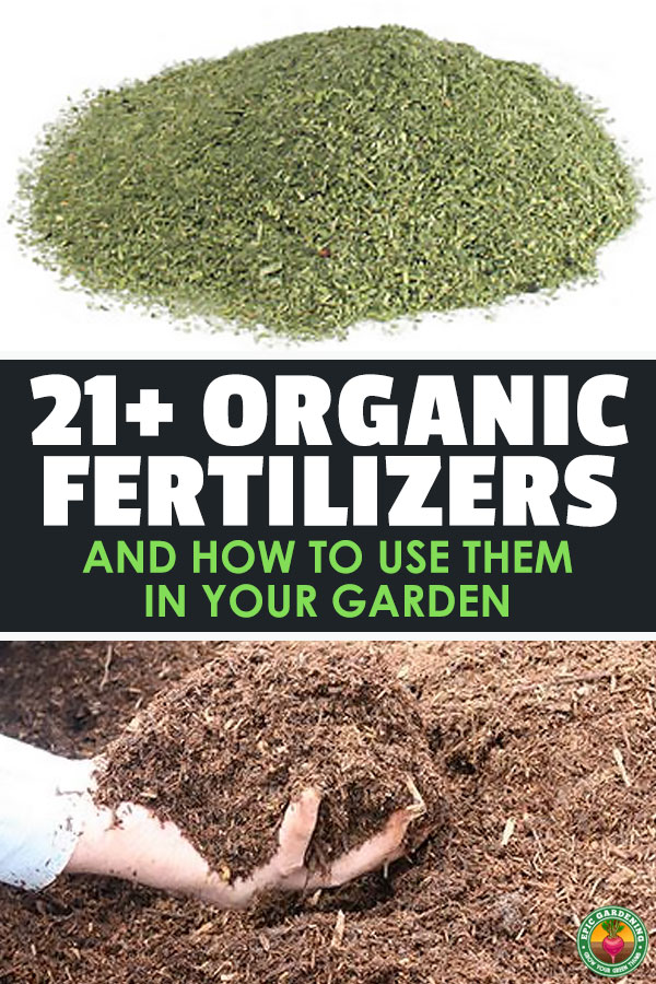 If your plants are struggling to grow, you might need to amend your soil with one or more organic fertilizers. Learn what they are and how to use them here.