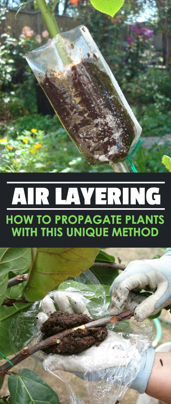 Air Layering: Propagating Difficult-Rooting Plants | Epic