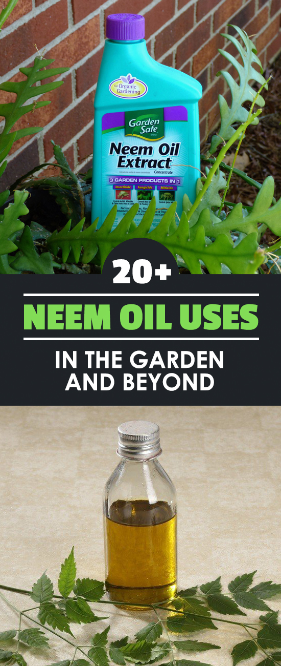 20+ Neem Oil Uses In The Garden and Beyond