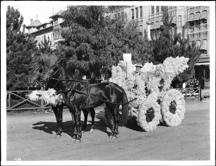 Pampas Grass-covered horse-drawn wagon in 1903 Tournament of Roses Parade.