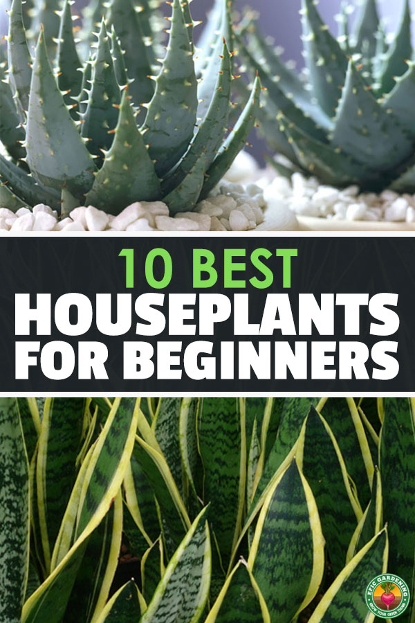 Adding plants to your home will brighten up your life, but caring for them can be difficult. These are the best houseplants for beginners - choose wisely!