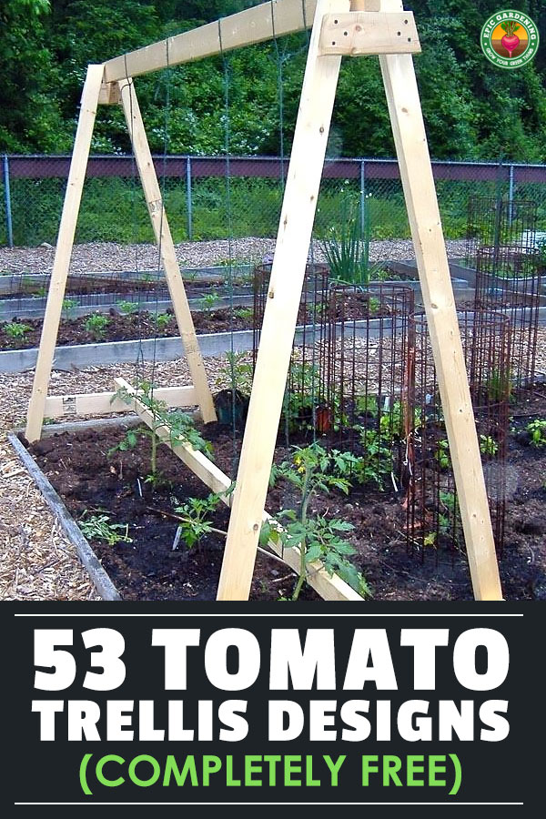 If you grow indeterminate tomatoes, these tomato trellis designs and ideas will make you head on out to the hardware store and get to building!
