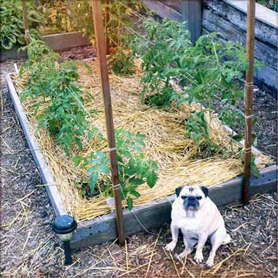 53 tomato trellis designs completely free for How to weave a net with string
