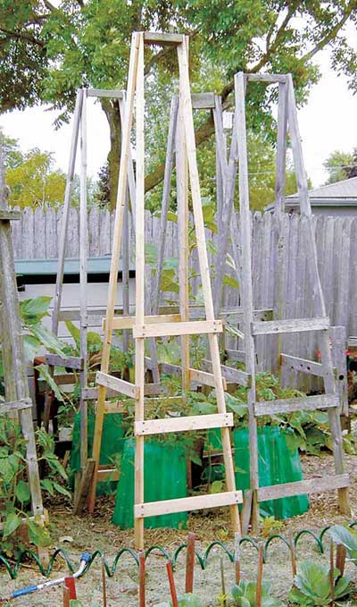 Ladder-Style Folding Tomato Cage