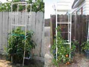 PVC Tomato Cages For Self-Watering Container Gardens
