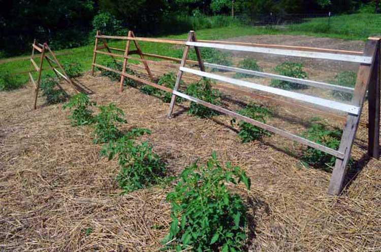 53 Tomato Trellis Designs (Completely Free) | Epic Gardening