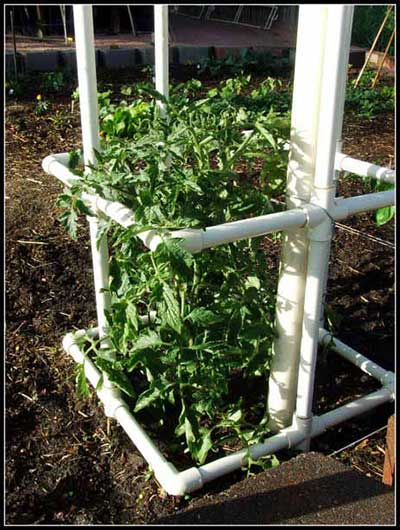 Square Staked PVC Tomato Cage