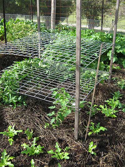 The Homemade Horizontal Trellis