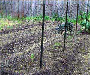 The Lean-To Tomato Trellis