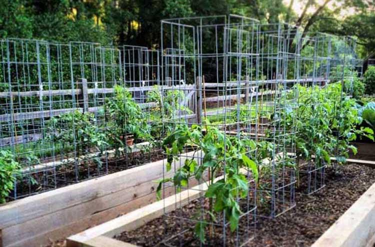 53 Tomato Trellis Designs Completely Free Epic Gardening
