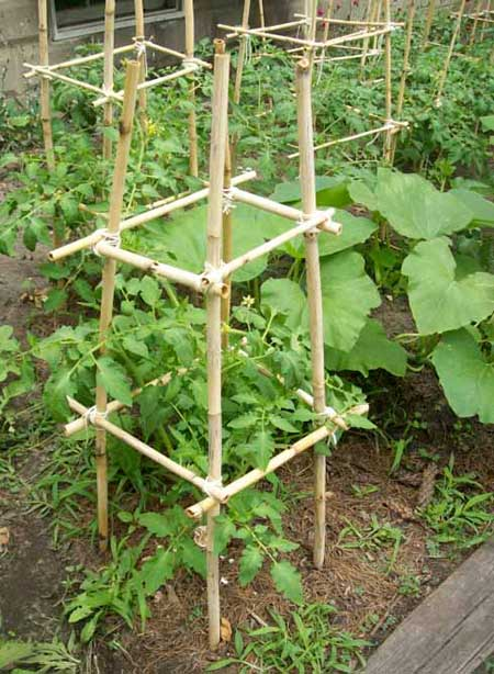The Bamboo Tomato Cage