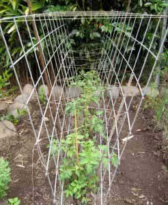 Bull Fence And Twine Tomato Cage