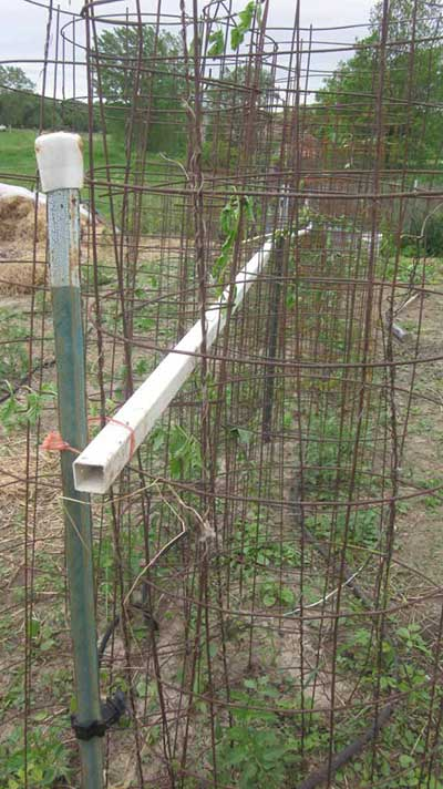 The Concrete Mesh Tomato Cage