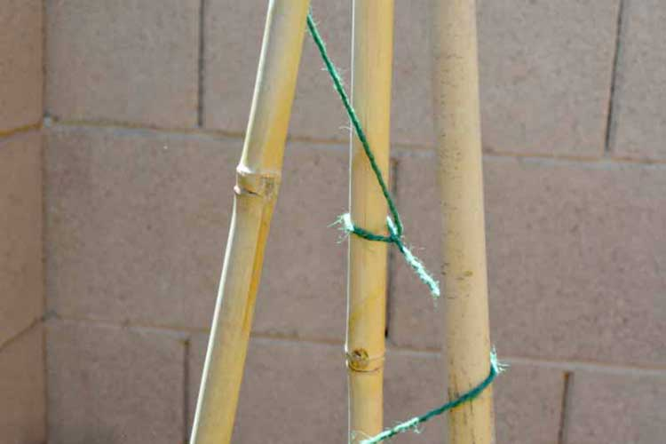 DIY Bamboo and Twine Tomato Spiral