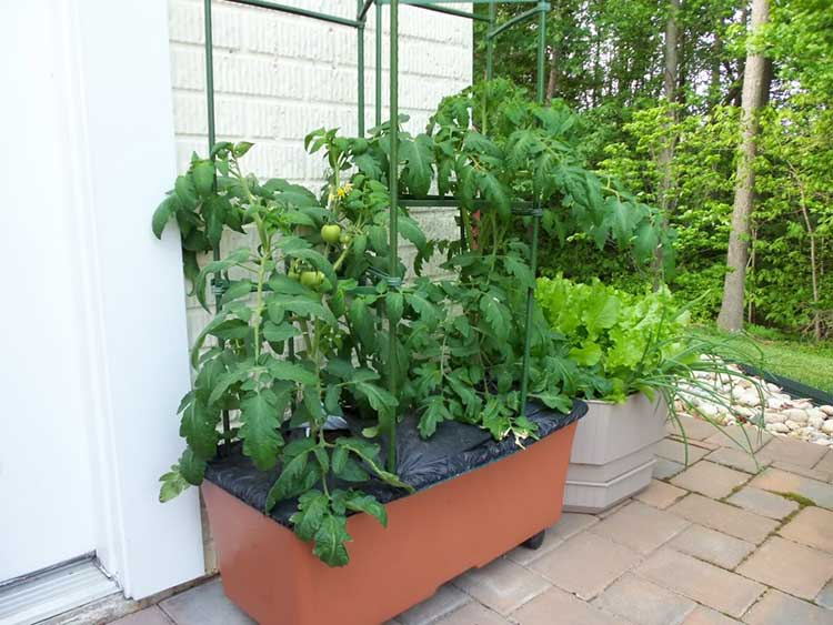 PVC Tomato Cage for Earthbox
