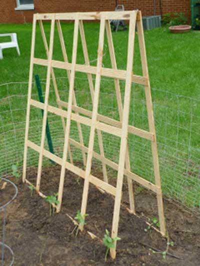 53 tomato trellis designs completely free