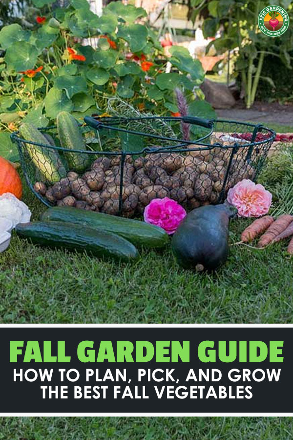 As summer winds down, don't think you're done gardening. Fall vegetables are delicious and easy to grow if you plan correctly. Learn how to start a fall garden.