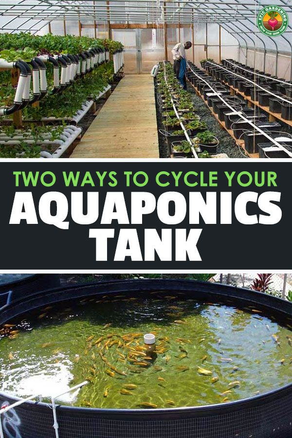 Cycling a Tank for Aquaponics With or Without Fish | Epic