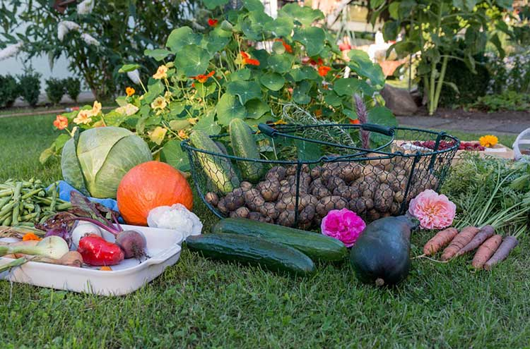 Fall Garden Guide: How to Plan, Pick, and Grow The Best Fall ...