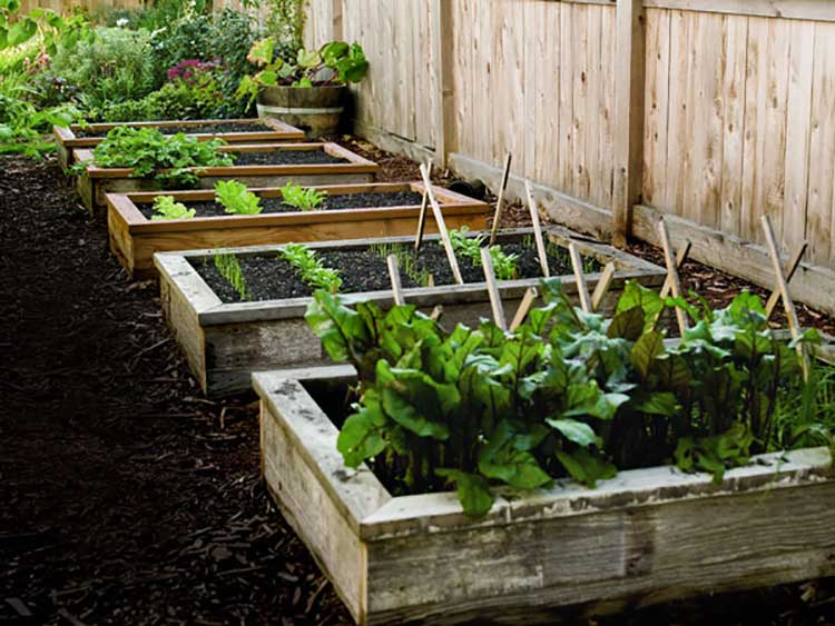 Cap-Railing Raised Garden Beds
