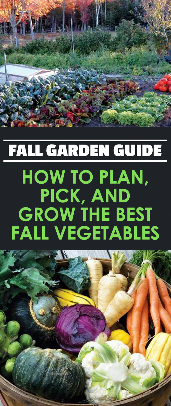 Fall Garden Guide How to Plan Pick and Grow The Best Fall