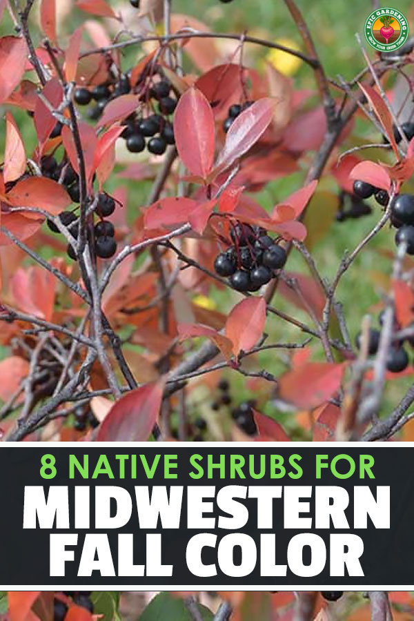 8 Must-Have Native Shrubs and Trees for Midwestern Fall Color