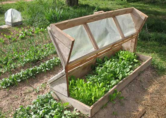 Amish Cold Frame