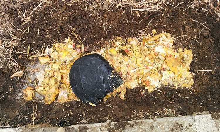 Spreading bokashi precompost in hole