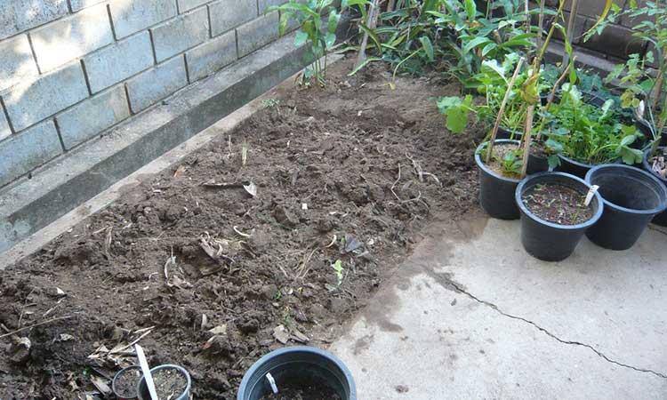 A freshly tilled plot
