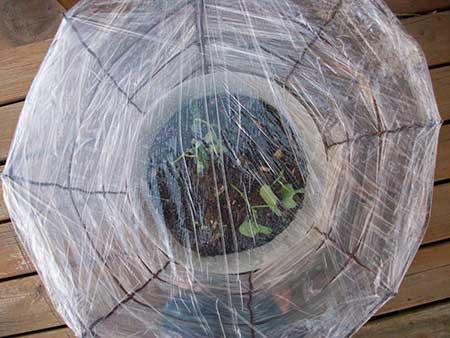 Tomato Cage Mini-Greenhouse