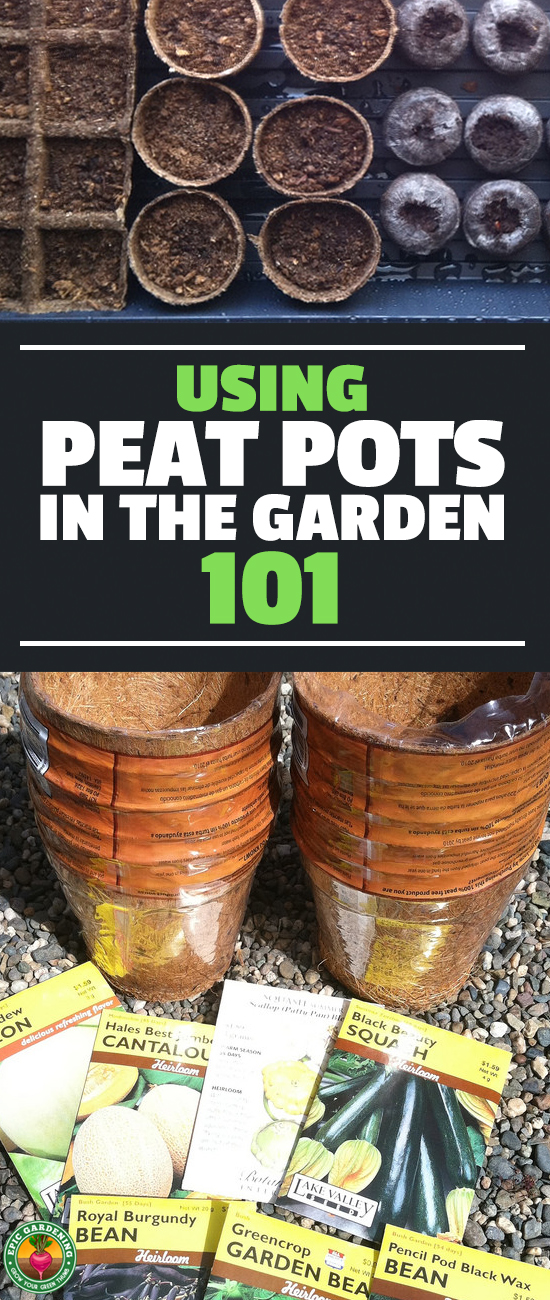 Are you getting ready to start seeds or doing transplants? Peat pots should be on your list! Here's everything you need to know about this eco-friendly option!