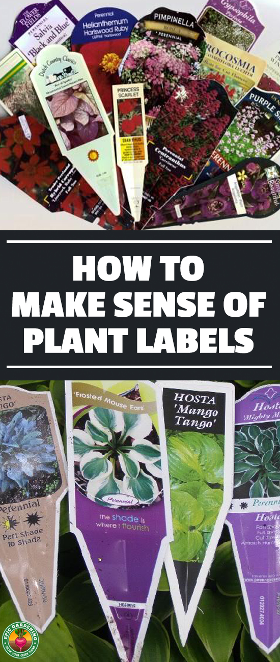 Do plant labels get you confused? Our helpful how-to guide will demystify the standard information on plant labels and help you read them from now on!