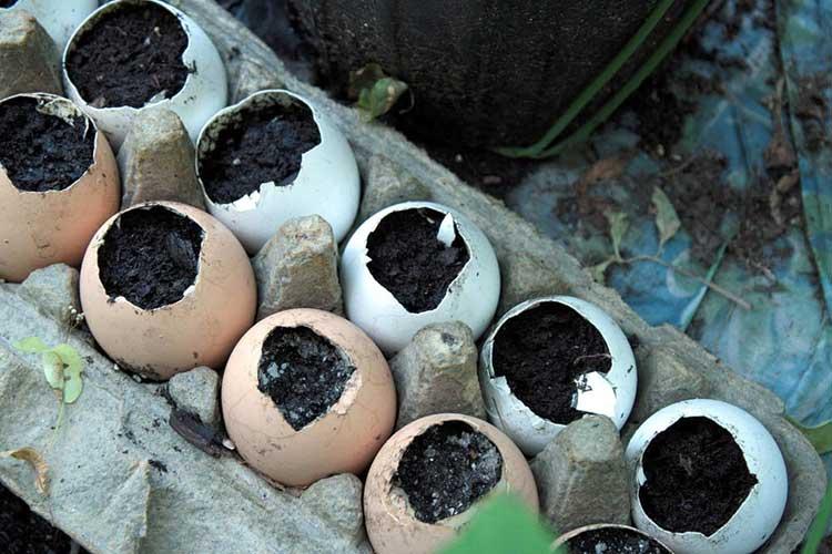 Eggshell pots