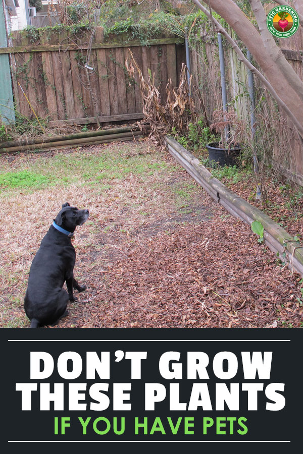 We love to have a great home for our pets, but some plants can be extremely dangerous. Learn how to make a pet-safe garden and which plants to avoid!