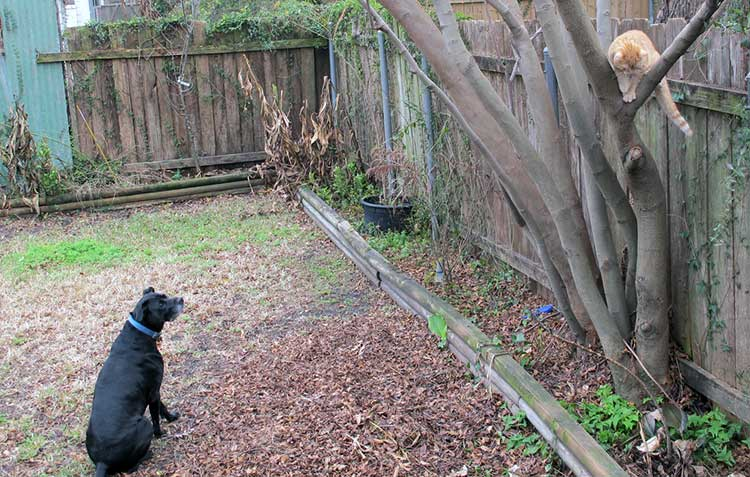 Creating a Pet-Safe Garden: A Guide to Toxic and Non-Toxic