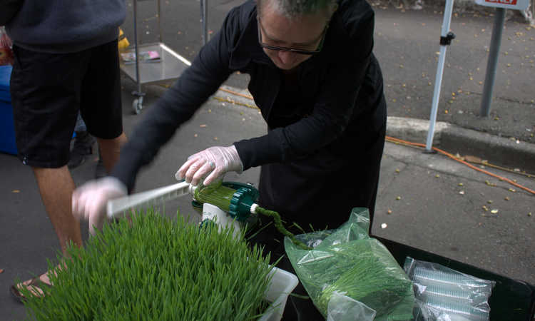 Making wheatgrass juice