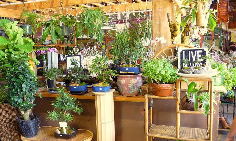 Indoor gardening basics
