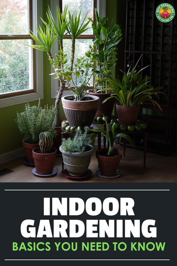 Just beginning to garden indoors? These indoor gardening basics will help you get started off right! Learn about plant lifecycles and how to grow them.