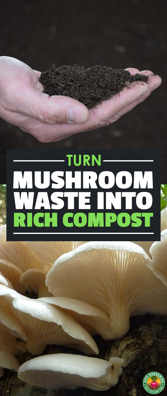 Mushroom compost is a great soil amendment which retains water and stops soil compaction. Learn all about how it's made commercially and how to make your own!