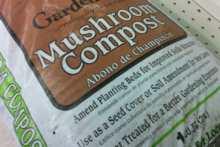 Mushroom Compost: What It Is, What It Does, And How To Make