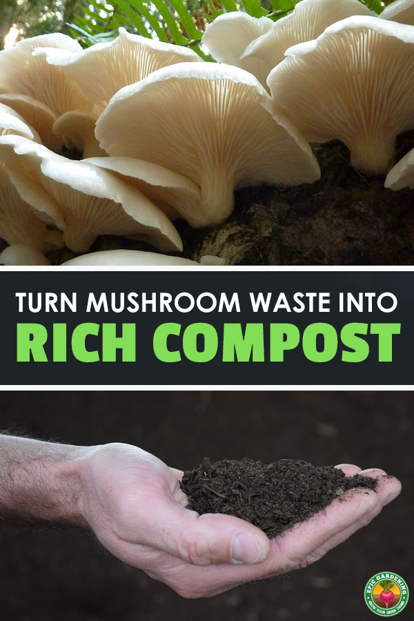 Mushroom compost is a great soil amendment which retains water and stops soil compaction. Learn all about how it\'s made commercially and how to make your own!