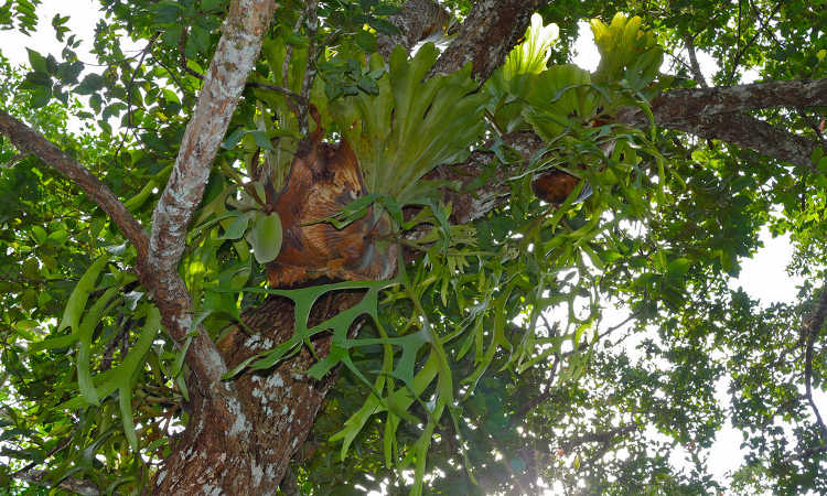 how to take care of a staghorn fern