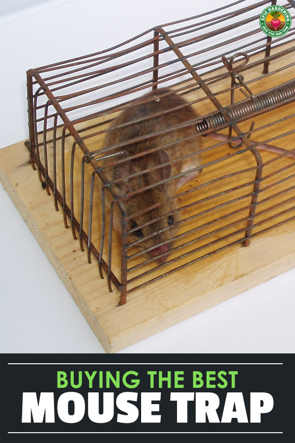 Got a mouse in the house? Our buyer\'s guide will help you learn which is the best mouse trap, what will work best for you, and how to use traps effectively!