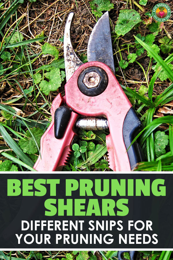 Pruning is a necessity, and you need the best pruning shears for your task. Learn all about these common tools and how to pick the best with our buyer's guide!